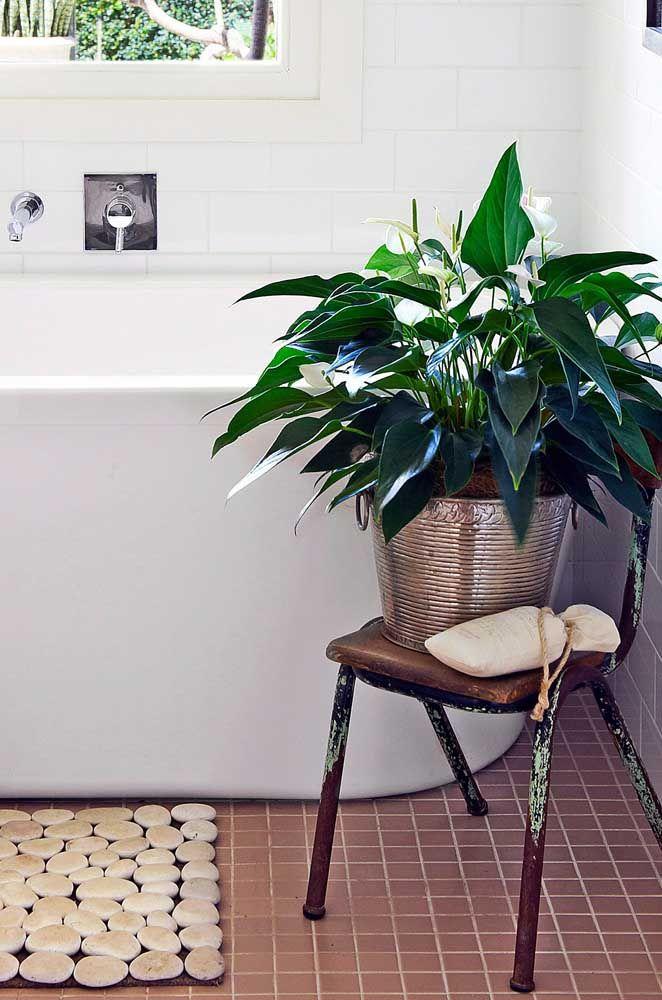 Lírio da paz para trazer frescor e vida ao banheiro