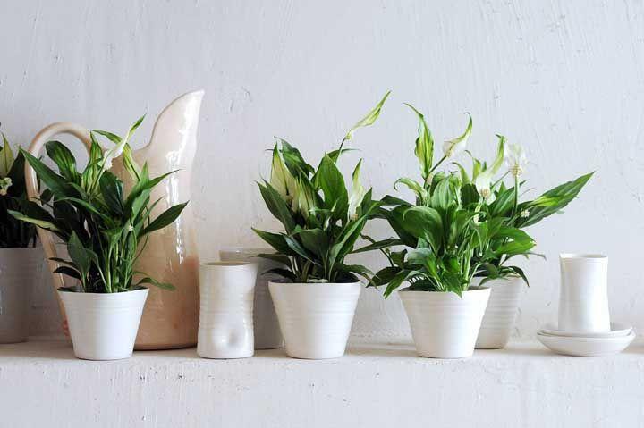Quando o assunto é decorar com plantas, não há limites; aqui foram usados quatro vasos de lírios da paz