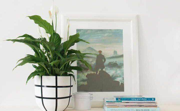 Lírio da paz: como cuidar e 65 ideias de decoração com fotos