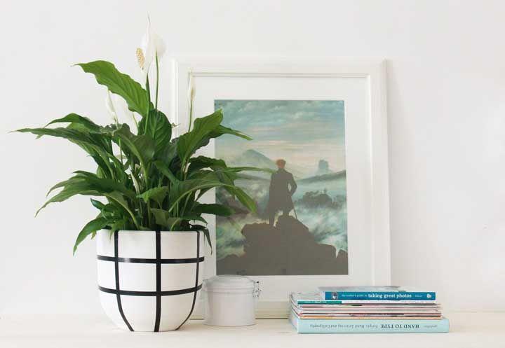 Moderno e minimalista? O lírio da paz também é para você!