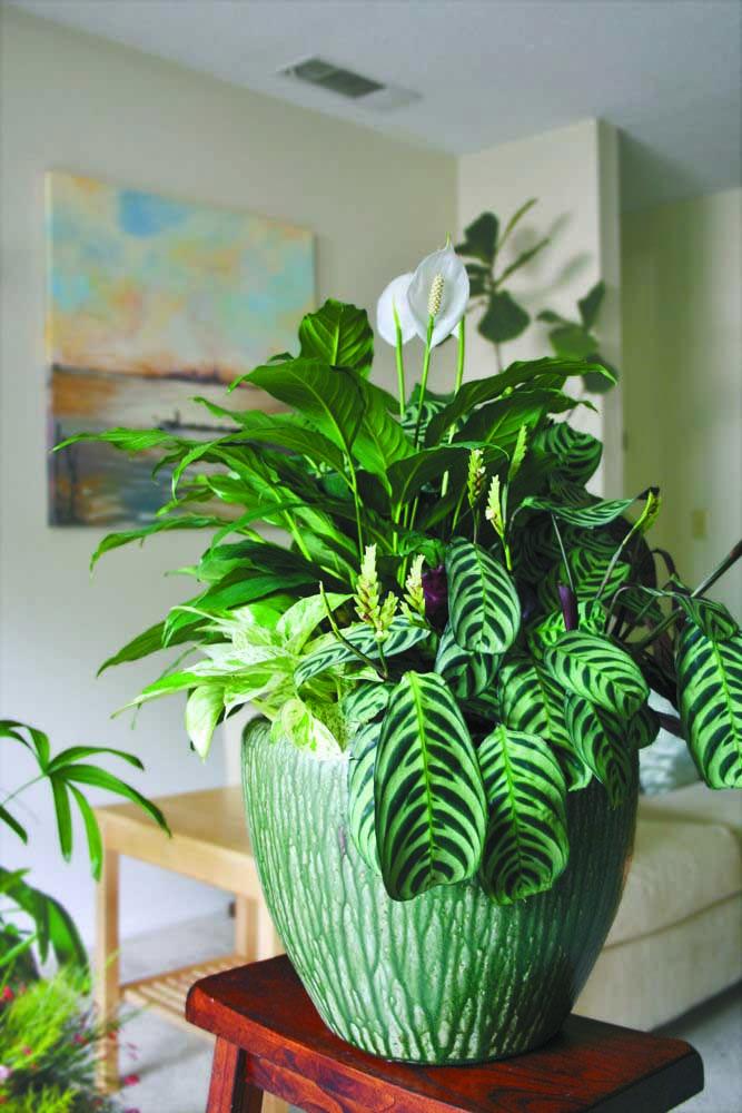 Mescle o lírio da paz com outras folhagens no mesmo vaso; lembre-se apenas que todas as plantas devem ter as mesmas características de cultivo, já que irão dividir o mesmo espaço