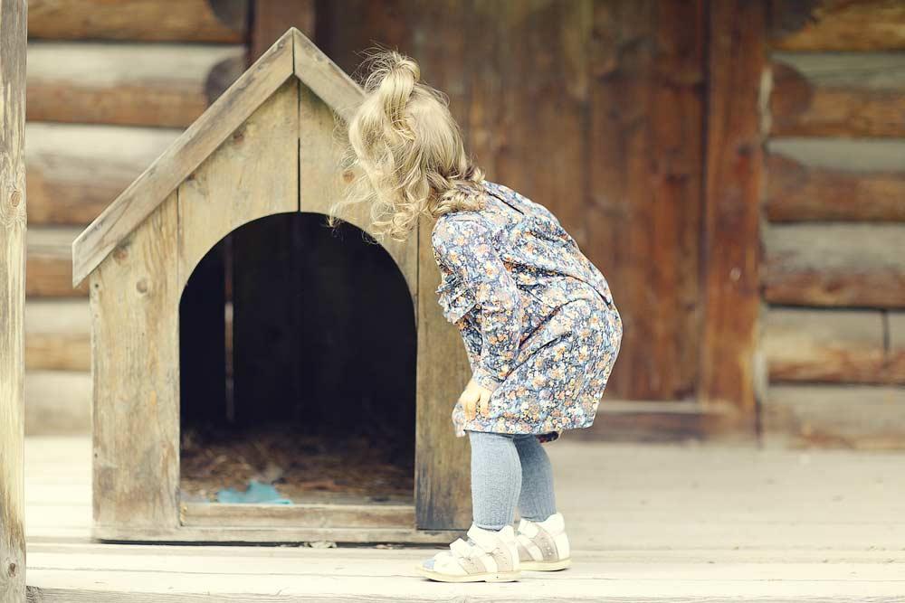 Como fazer casinha de cachorro: veja o passo a passo e cuidados essenciais