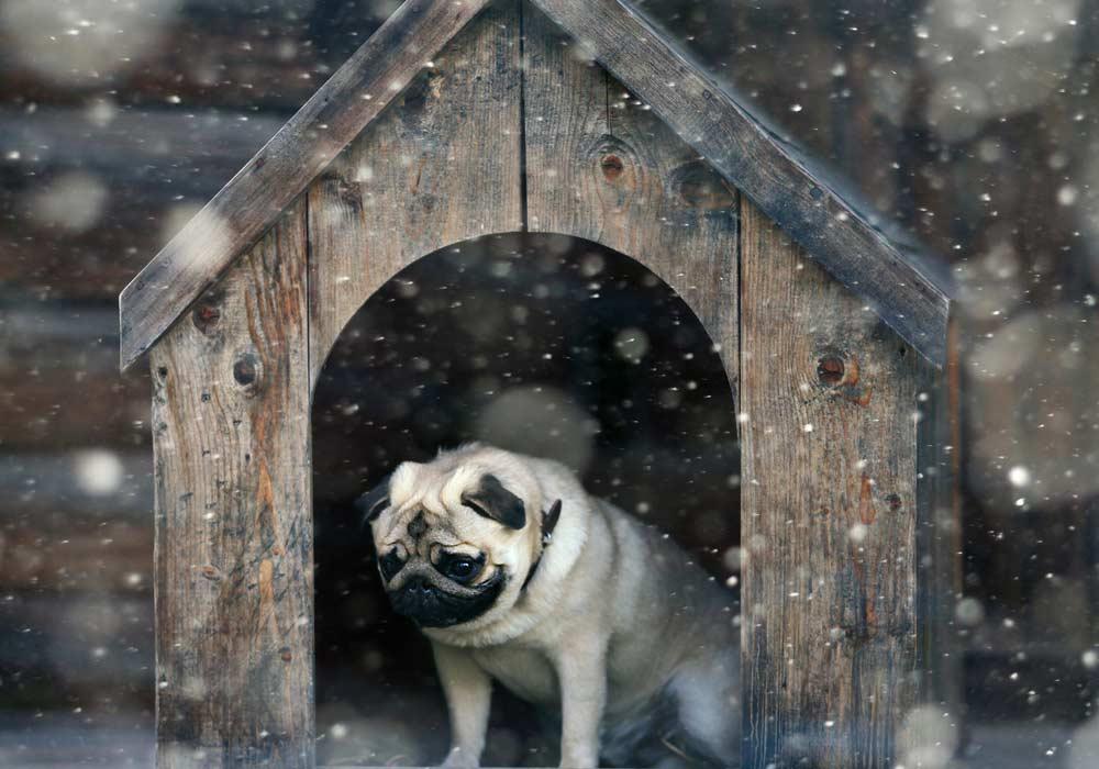 Como fazer casinha de cachorro: cuidados