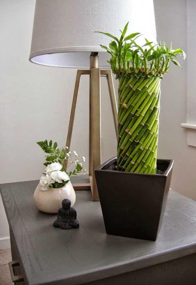 Alguns exemplares de bambu da sorte se assemelham tranquilamente a uma obra de arte