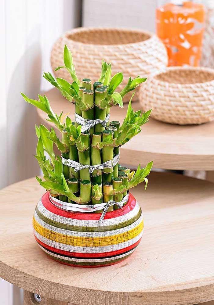 É possível brincar também com a composição do bambu da sorte no vaso, aqui, por exemplo, ele lembra uma fonte de água