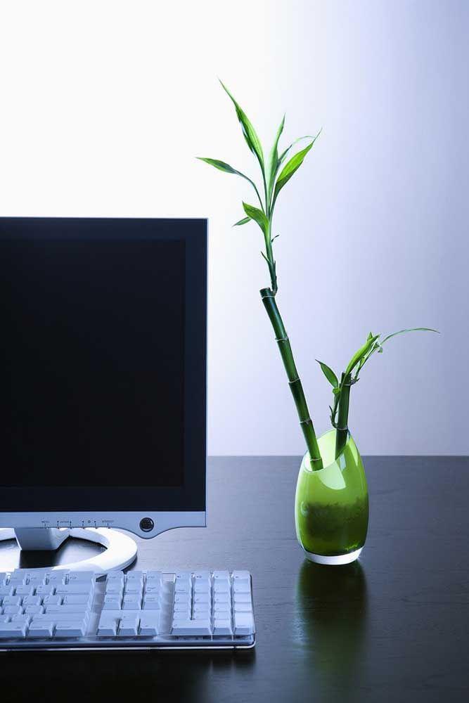 No home office, o bambu da sorte evoca paz e tranquilidade