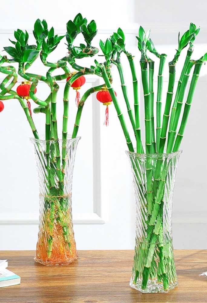 Os galhos individuais de bambu da sorte formam um arranjo moderno e refrescante para a casa; destaque para as pequenas lanternas chinesas vermelhas penduradas nas folhas