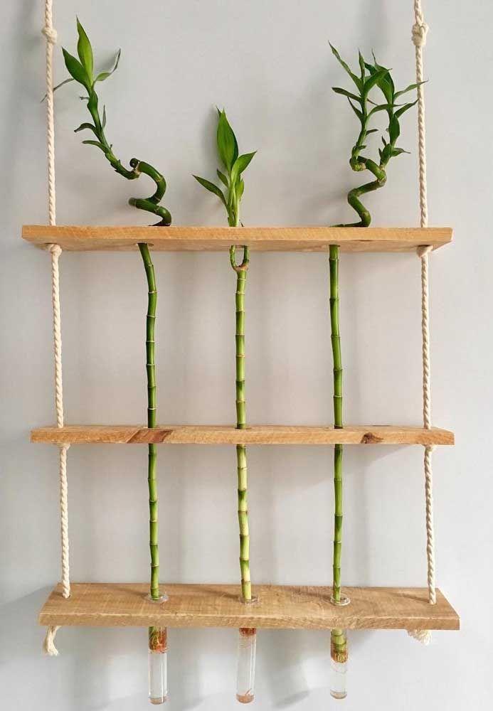 Quer uma ideia original para cultivar o bambu da sorte? Então aposte em tubos de ensaio, olha só como fica legal