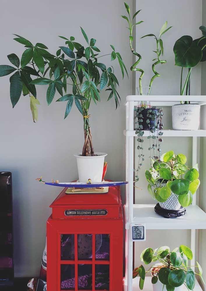 Tem mais plantas em casa? Não tem problema, coloque o bambu da sorte perto delas, ele faz amizade muito bem