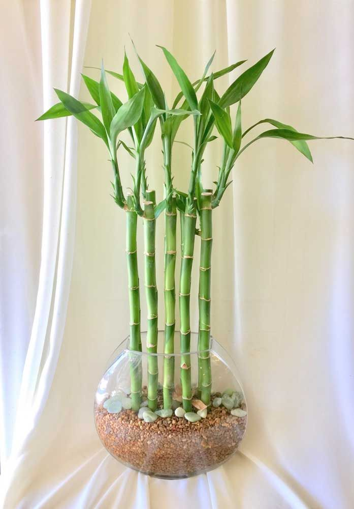 Combine pedras de diferentes tamanhos para criar um vaso lindo para o bambu da sorte