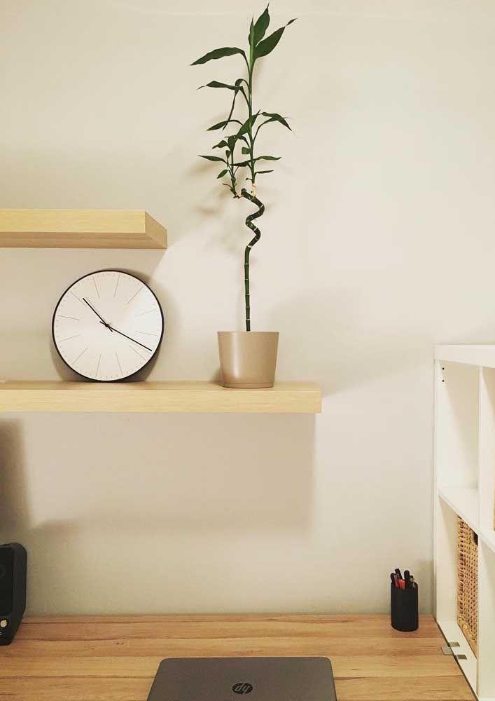Quem não precisa de uma planta zen e cheia de positividade para o local de trabalho, não é mesmo?