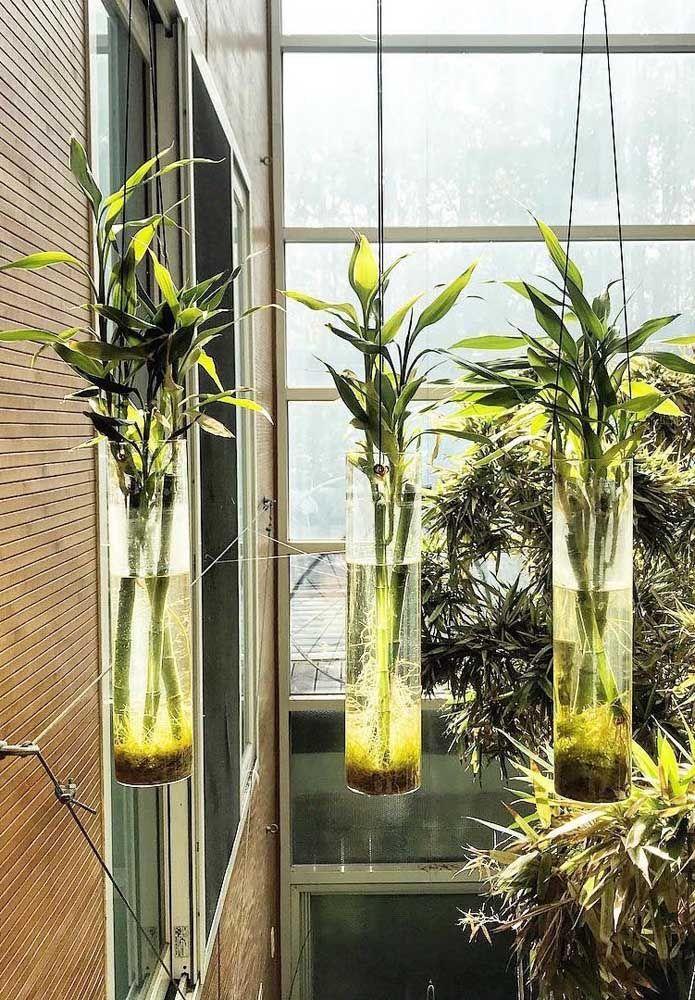 Jardim suspenso de bambus da sorte: já pensou nisso?