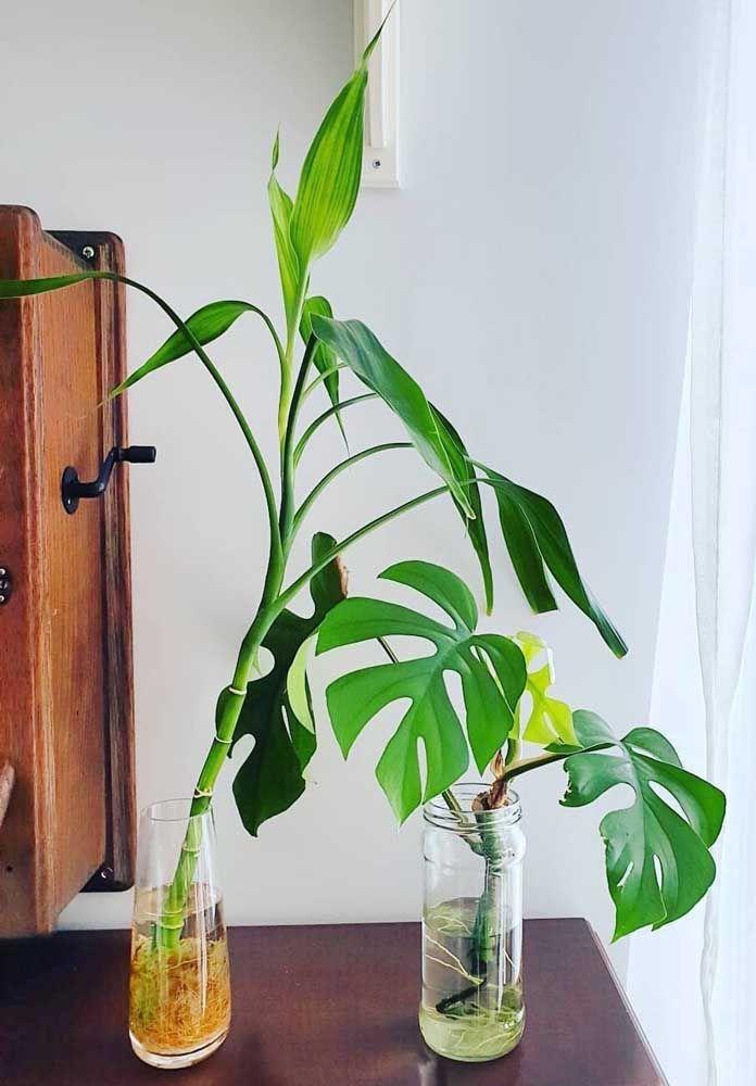 O que acha de combinar plantas aquáticas na decoração? O resultado é incrível