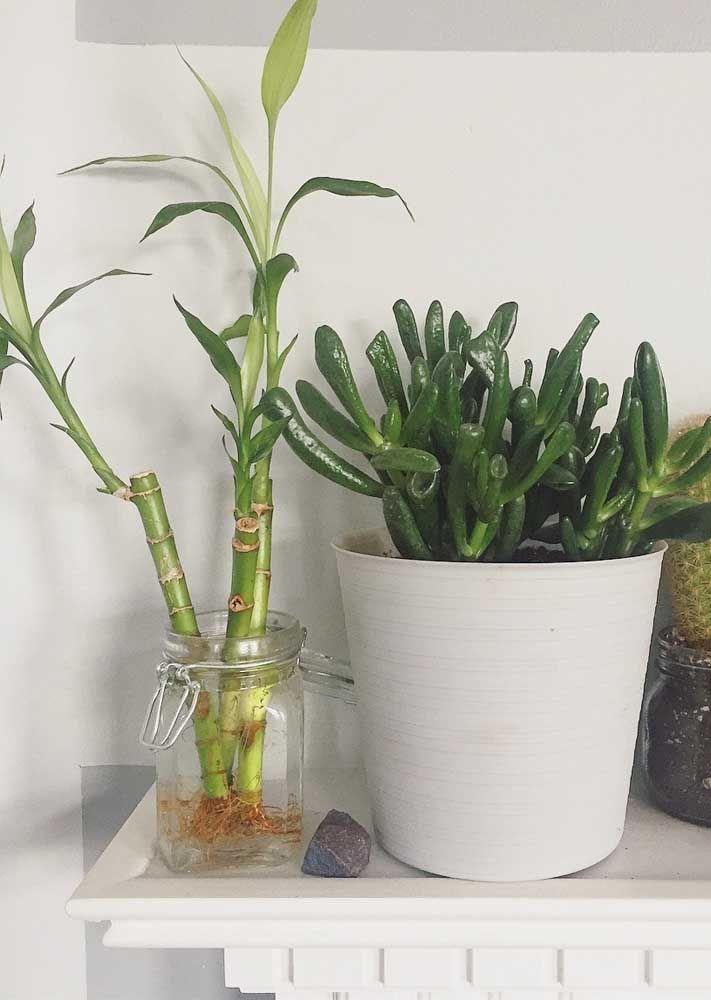 Você nem precisa se preocupar com o recipiente para o bambu da sorte, vale reaproveitar potes sem uso que estão lá na cozinha