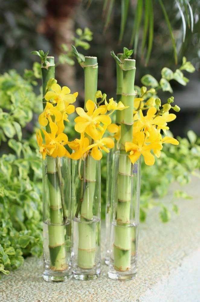 Para fazer mudas de bambu da sorte basta cortar um talo da planta e coloca-lo na água, em pouco tempo ele criará raízes e novos ramos começarão a surgir