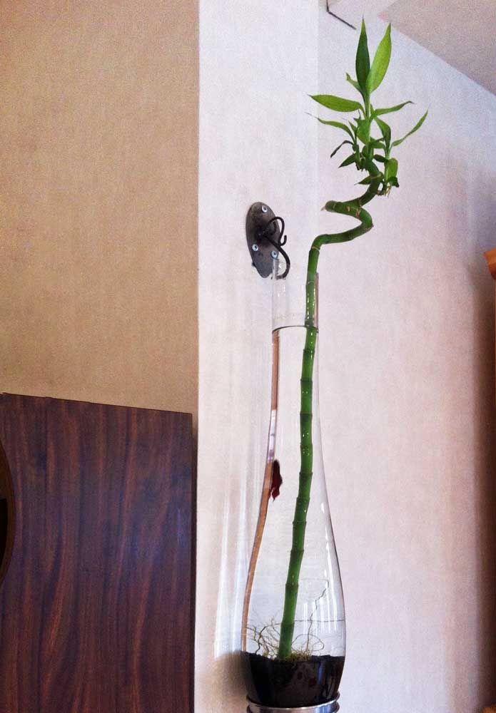 Terra e água: os dois elementos se unem nesse vaso para cultivar o bambu da sorte