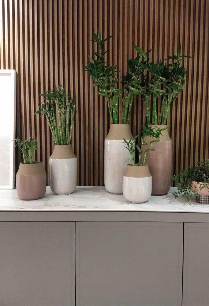 Combinação de vasos de tamanhos diferentes para os bambus da sorte