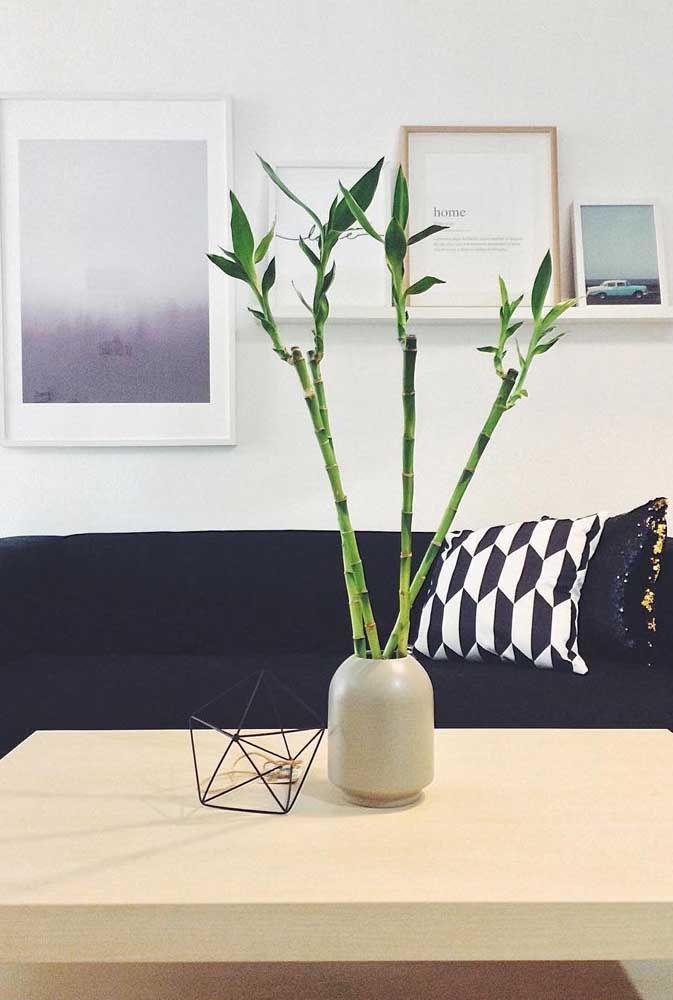 Decore a sala de estar com bambu da sorte e deixe as boas energias fluírem pela casa