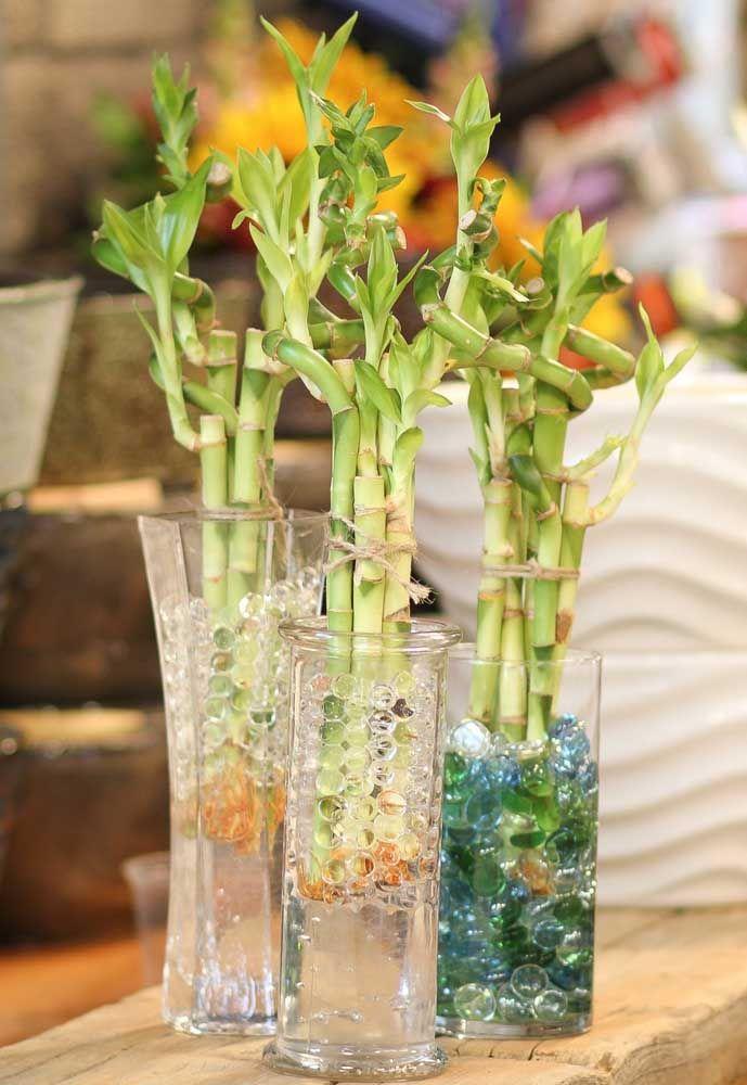 Outra opção para o vaso de bambu da sorte são as bolinhas de gel ao invés das pedras