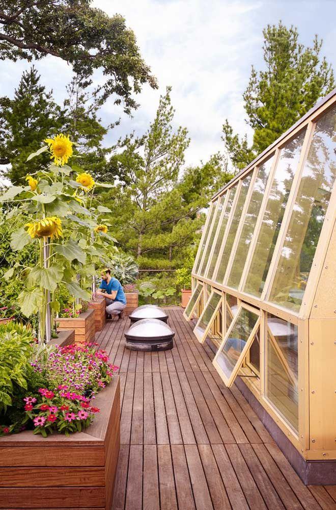 Jardim de girassóis no telhado de casa