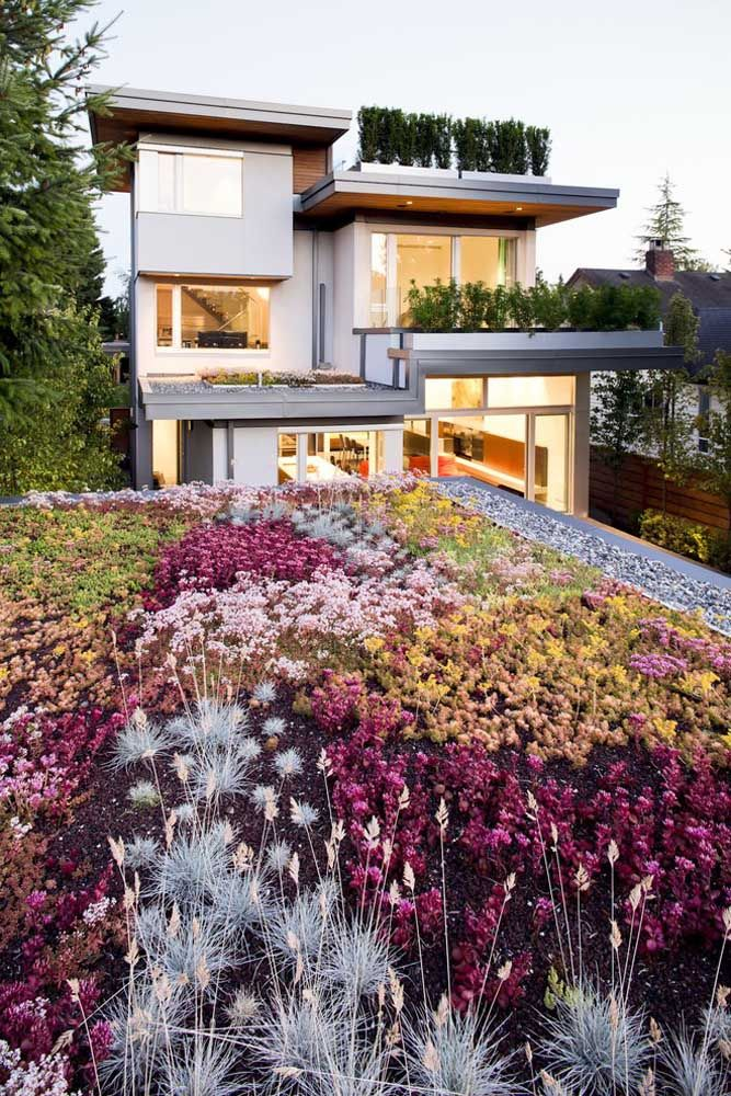 Jardim de plantas rasteiras e multi coloridas