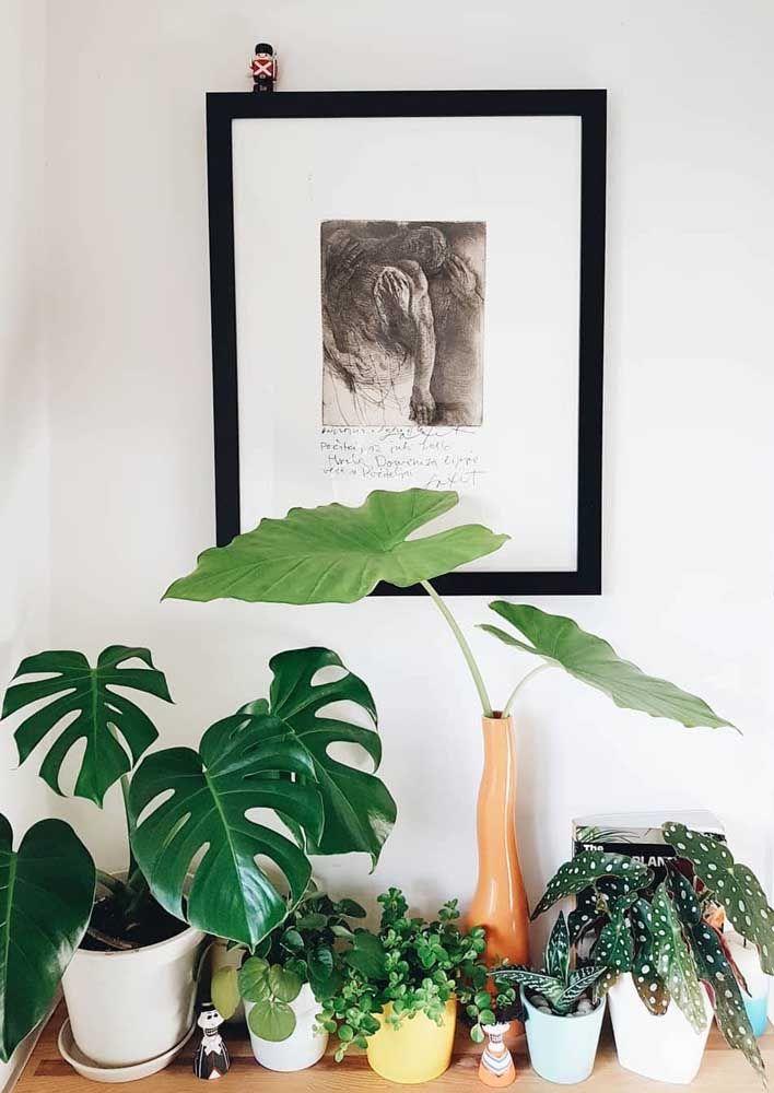 Escolha um lugar da casa cheio de luz e coloque suas plantinhas lá