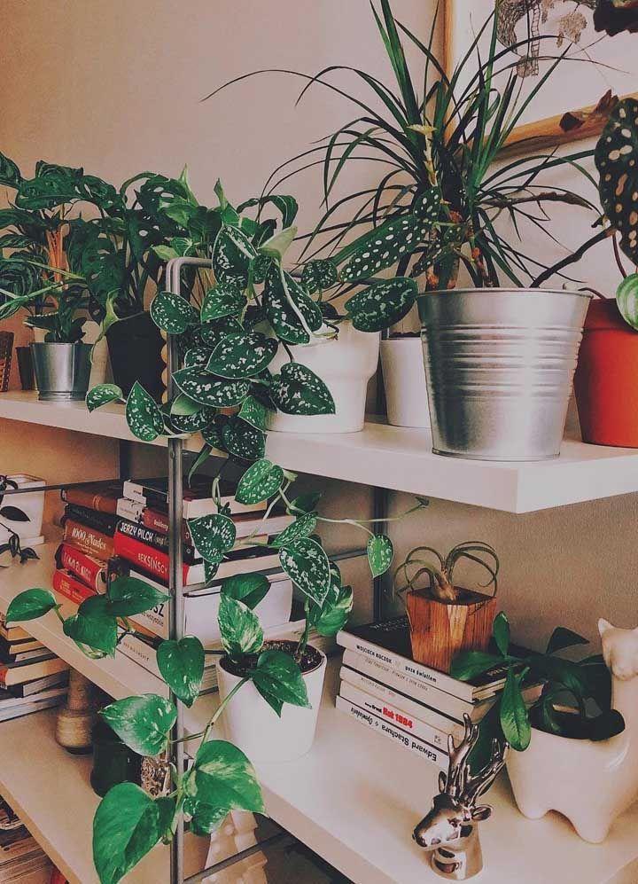 Livros, luz e Begônia Maculata: uma decoração moderna e descolada para aquele lugar especial da casa