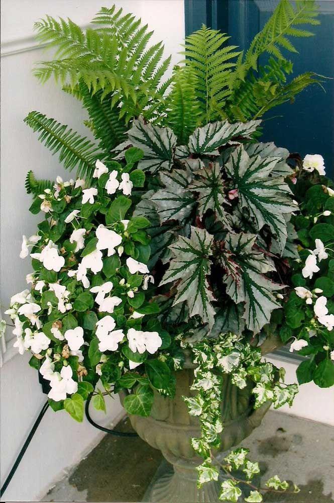Begônia de folhas e begônia de flores dividindo o mesmo vaso no quintal