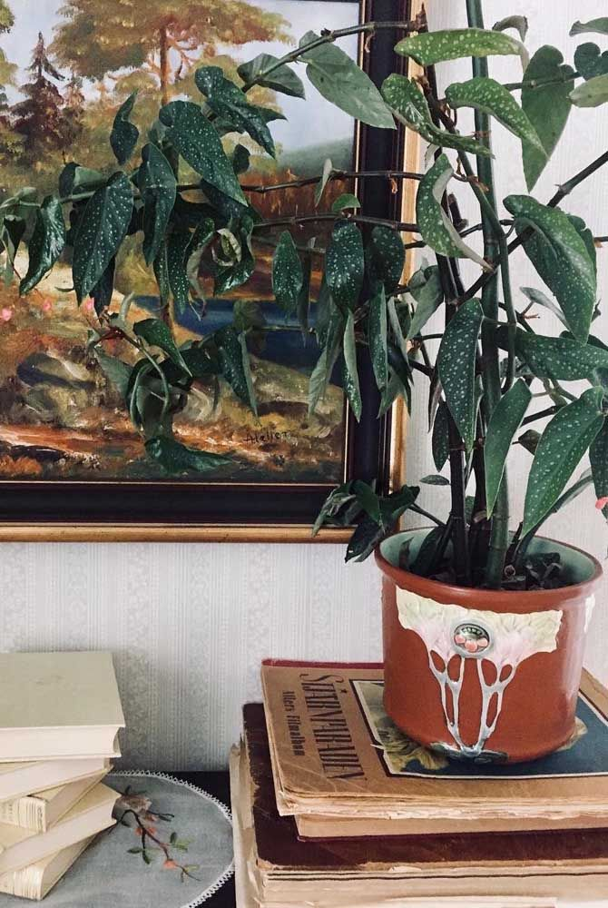 Aqui, o vaso de Begônia Maculata parece se integrar a paisagem do quadro