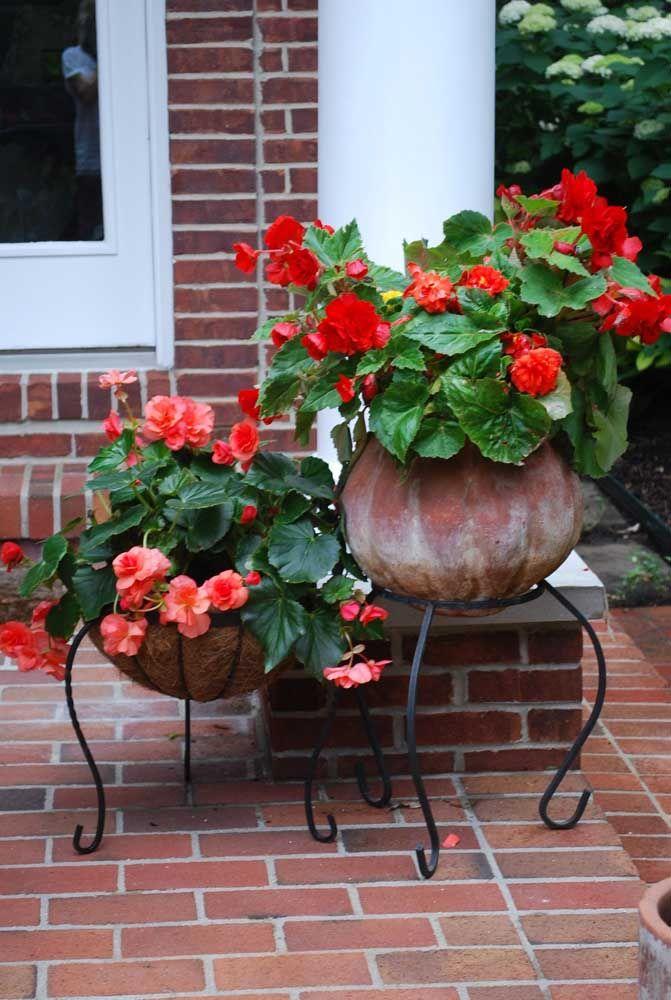 Use begônias coloridas para decorar o quintal e lembre-se: quando bem cuidadas, elas florescem o ano inteiro