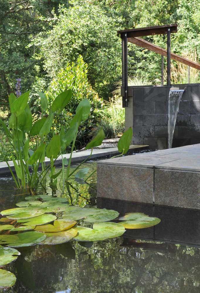 As plantas podem ser colocadas em vasos dentro do lago artificial