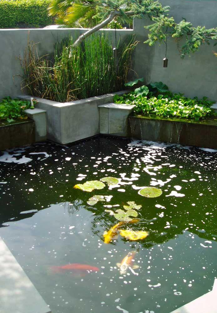 Se deseja criar carpas no seu lago artificial lembre-se que os cuidados são um pouco diferentes