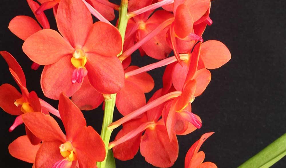 Tipos de orquídeas: conheça as principais espécies para plantar no jardim