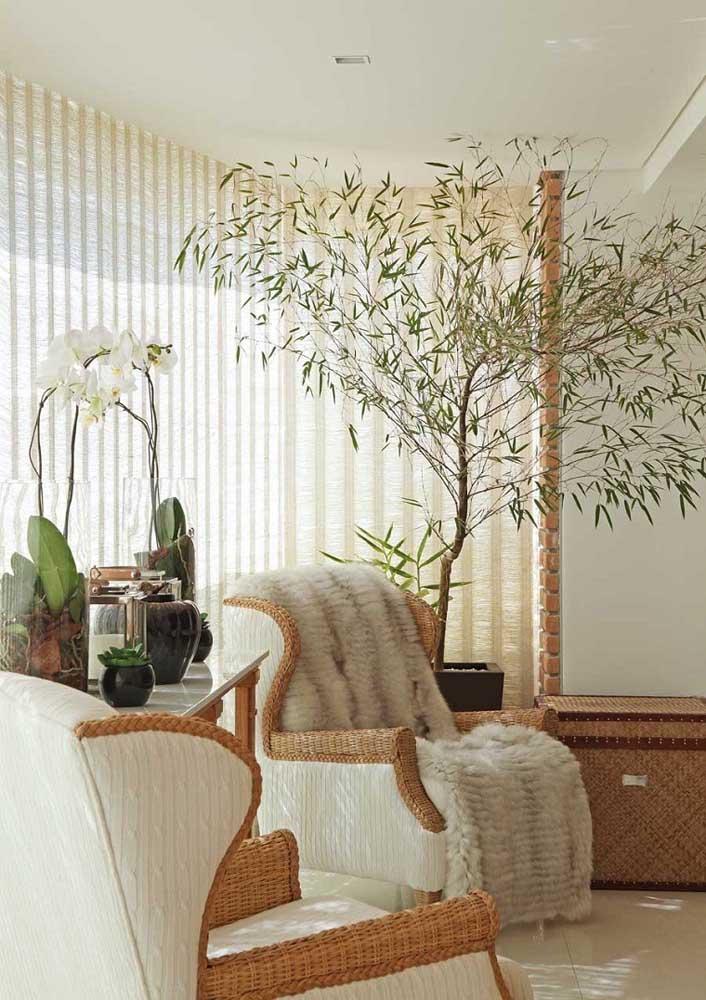 Para quem quer dar movimento no espaço, o Bambu Mosso é uma ótima pedida