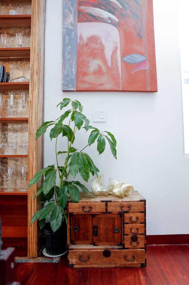 A Ciclanto é ótima para ambientes internos por ocupar pouco espaço