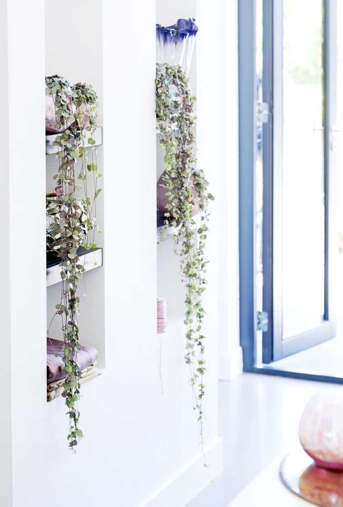 Perfeita para ambientes internos, a Columeia tem folhas lindas e gosta de luz