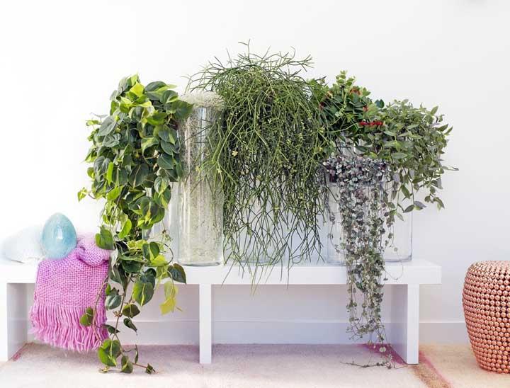 A Columeia forma lindas composições com outras plantas