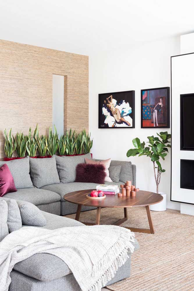 Que linda inspiração! A Espada de São Jorge ficou perfeita atrás do sofá, formando uma cerca verde para o ambiente