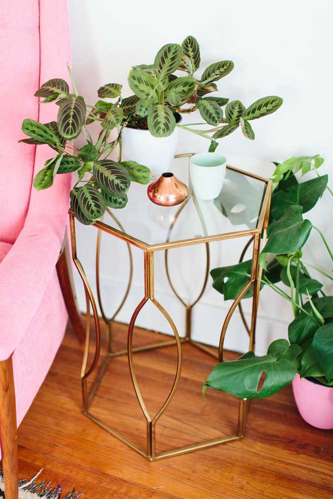 A Marantas traz essa mix de verde e roxo lindo para os ambientes internos