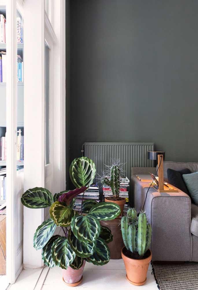 Quem sonha em ter uma planta dentro de casa pode apostar na Marantas