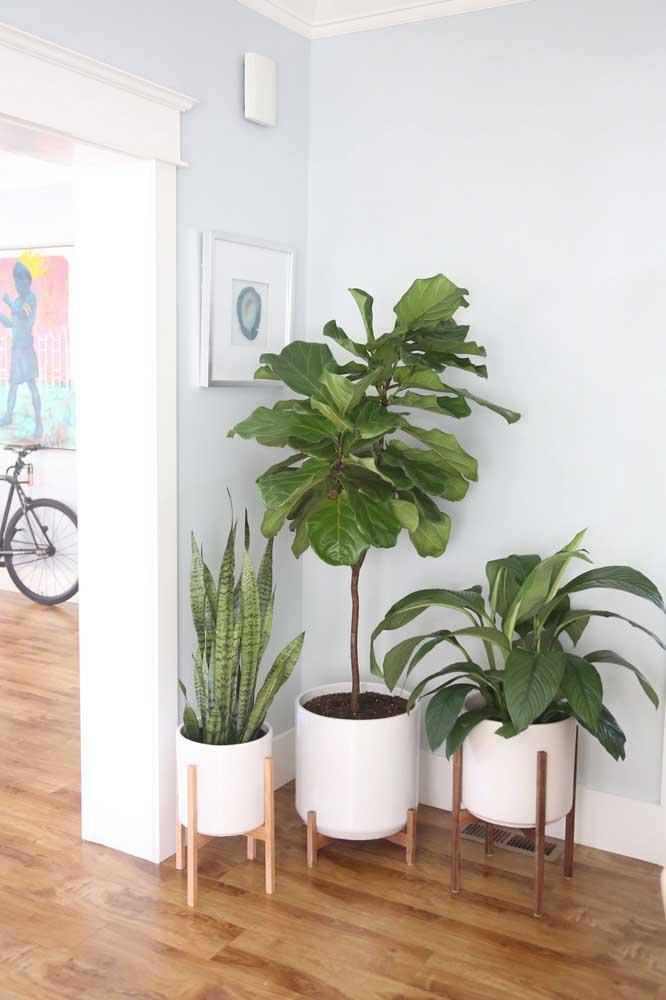 Para salas de estar, a Pacová é uma ótima opção de planta, que gosta de sombra