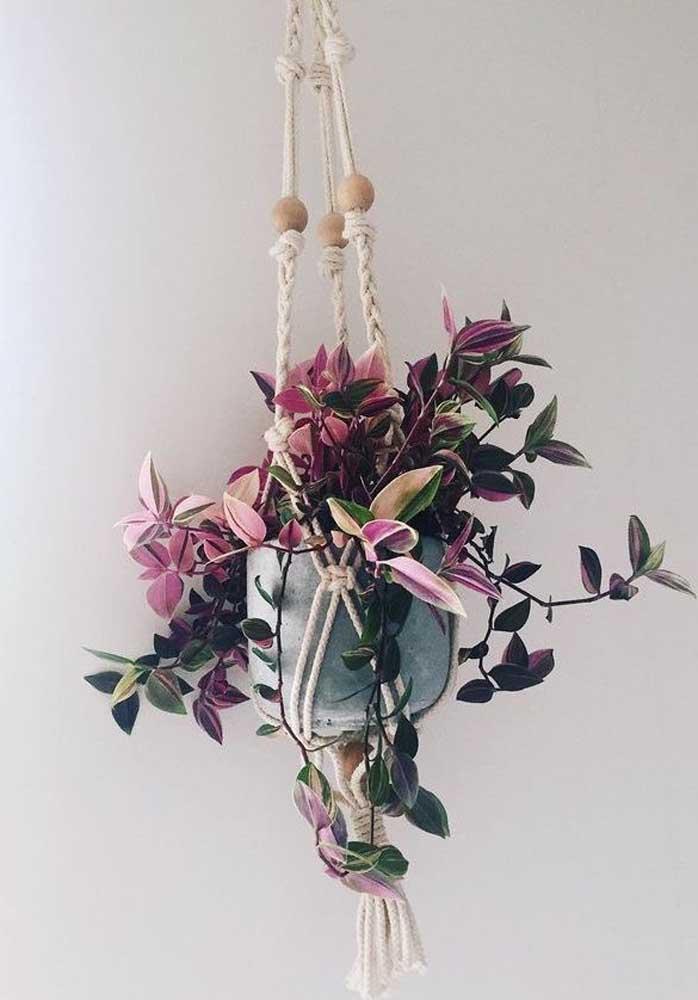 Nos vasos suspensos, a Zebrina encanta ainda mais