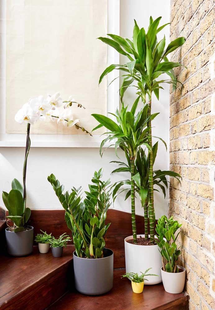 Já que não precisa ser regada regularmente, a Zamioculcas é muito indicada para quem não tem tempo de cuidar das plantas