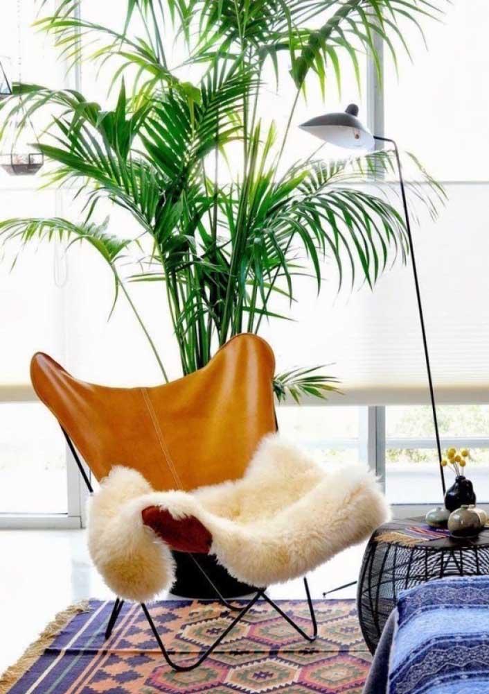 O Bambu Areca cresce com facilidade e causa um efeito incrível no ambiente