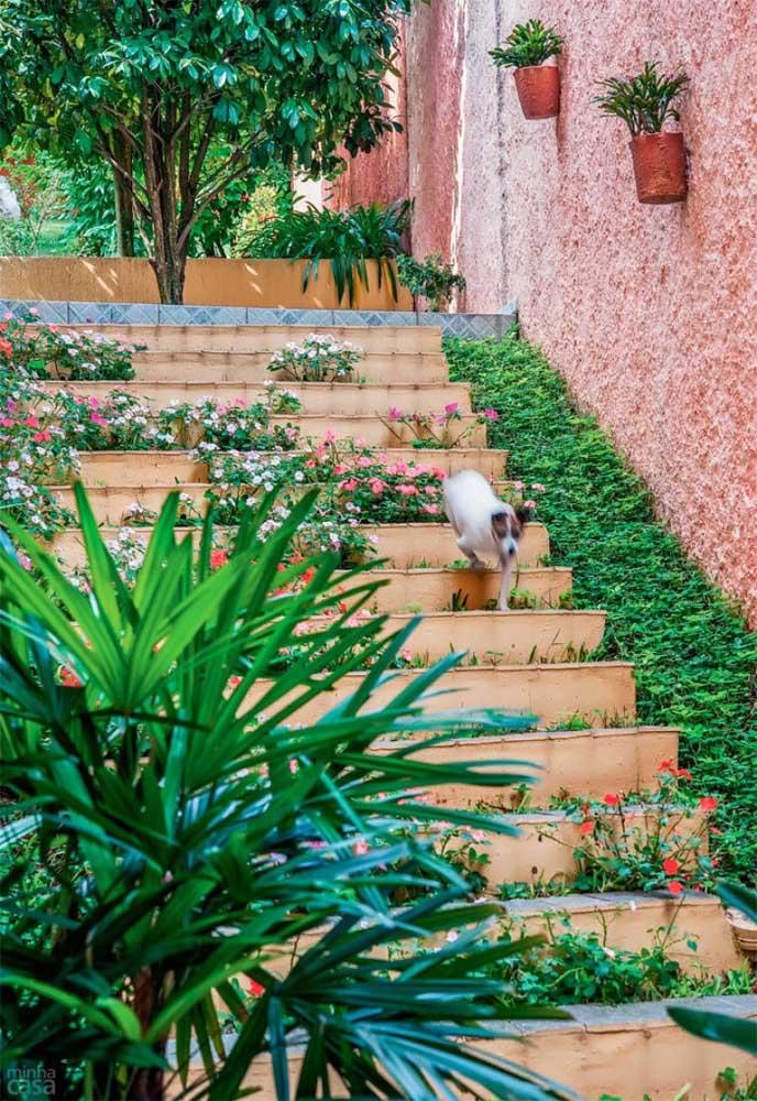 A grama amendoim pode destacar e valorizar áreas até então renegadas do jardim, como a lateral da escada