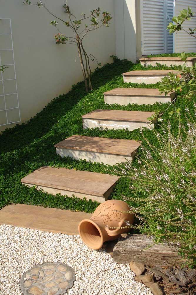 Em três meses a grama amendoim atinge a cobertura completa e o seu jardim fica lindo de viver