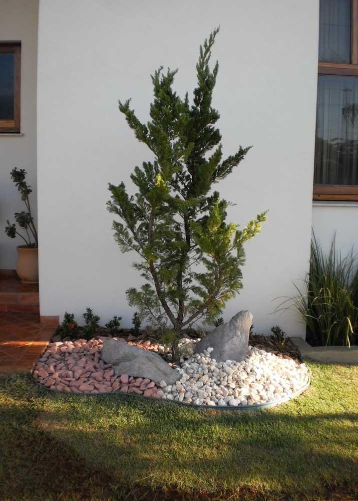 Jardim simples finalizado com grama batatais; para conter o avanço da grama sobre o pinheiro foi utilizado um limitador