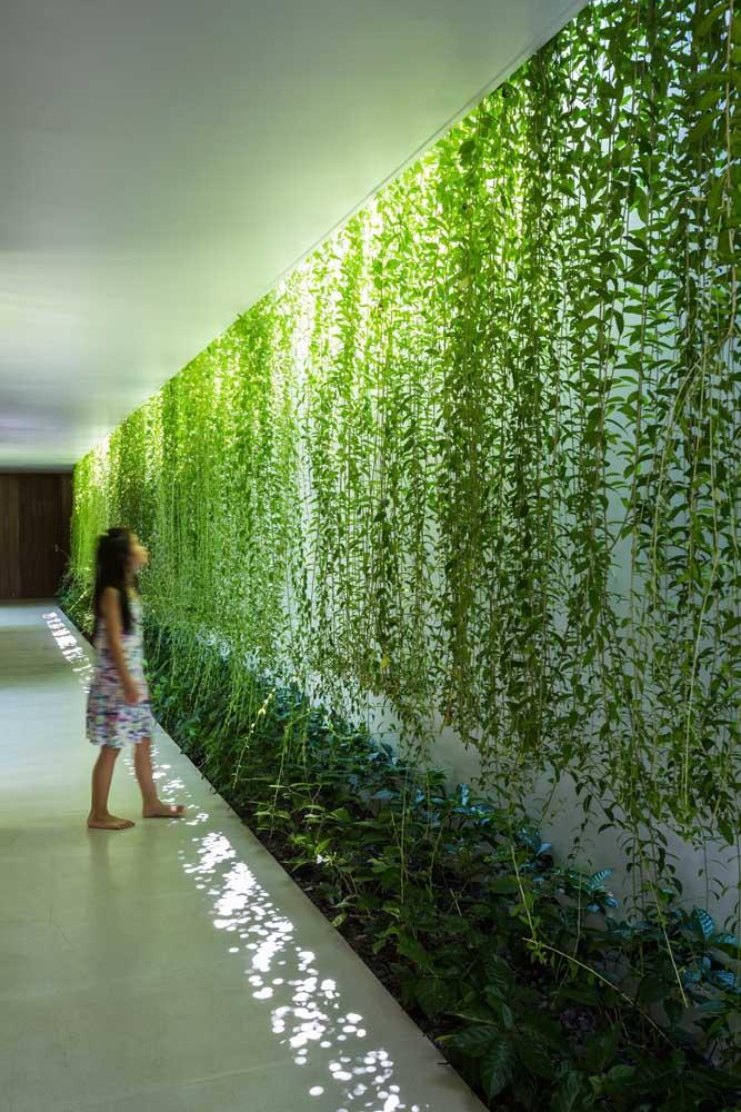 Cascata verde no corredor entre a parte interna e externa da casa; aqui a trepadeira foi cultivada de modo suspenso