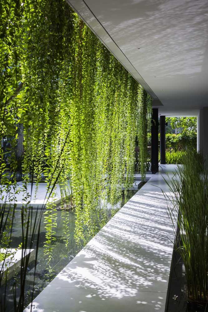 Relaxe com os feixes de luz que atravessam essa cascata verde