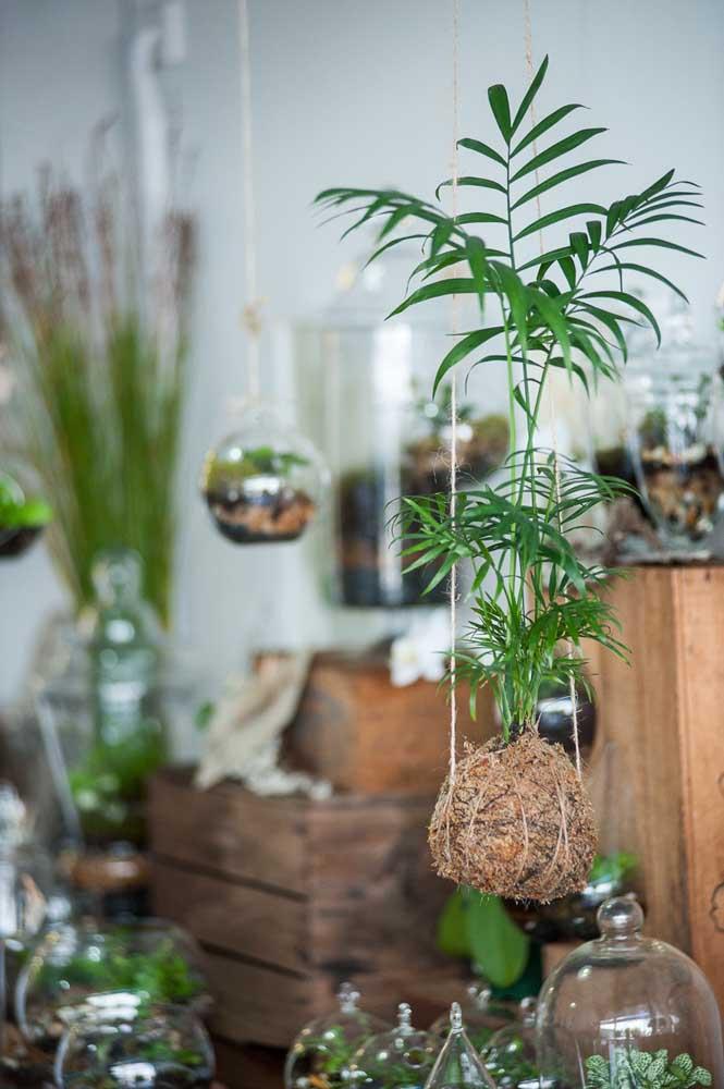 Dá até para cultivar uma palmeira na kokedama! Incrível como a técnica é versátil!